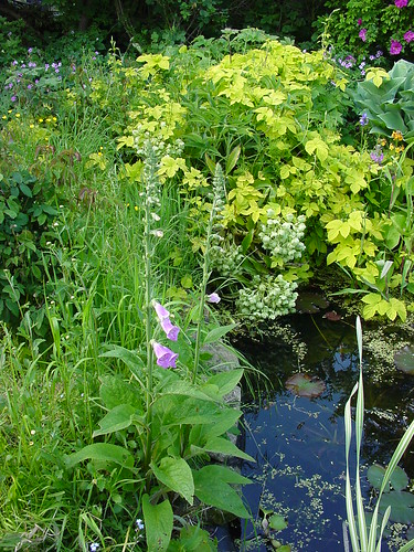 More pond and surrounding plants wildlife friendly for Pond friendly plants