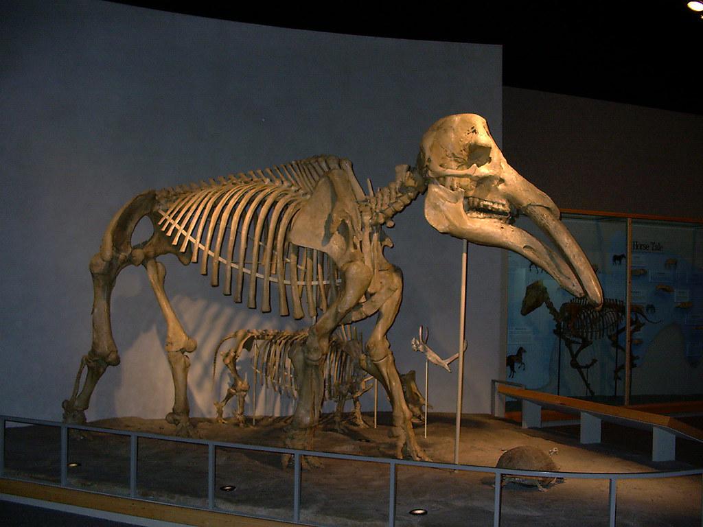 Denver Natural History Museum Dinosaurs