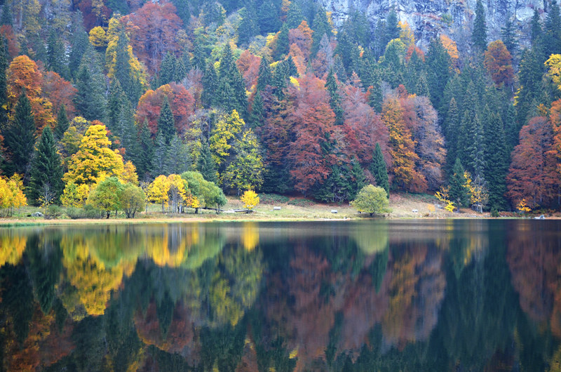 Autumn colours, Feldsee, Black Forest, Germany