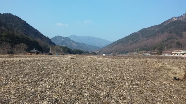 수침동: 배추밭