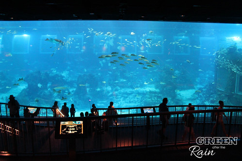 160908d Maritime Museum and SEA Aquarium _267