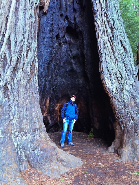 Big Basin Redwoods State Park, California, USA
