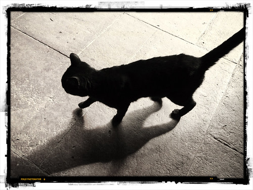shadow of a black cat in Spain run through Pixlromatic