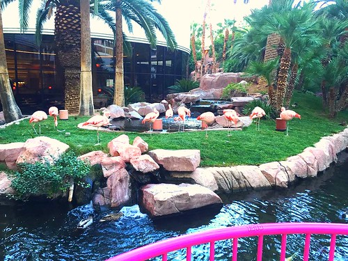 Flamindos at the Flamingo