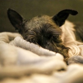 Testing the @getolympus M.Zuiko 25mm PRO lens and OM-D E-M1 II #schnauzers #getolympus #schnauzersofinstagram #olympus #omdem1mkii | by James Davidson