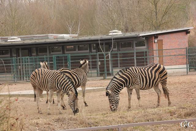 Ausflug Tierpark Friedrichsfelde 05.03.1727