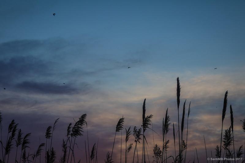 Aves sobre la laguna de Cal Tet
