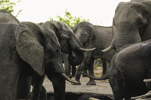 Baño de elefantes en oddcatrina.com