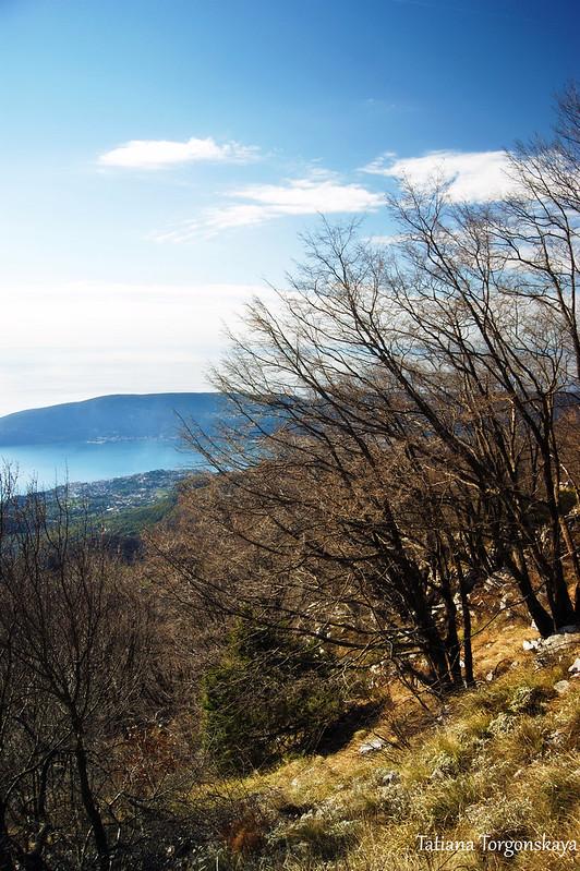 Буковые рощи на горном склоне