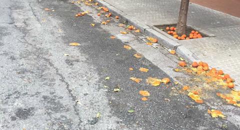 Padre-Pedro-Ayala-Naranjas