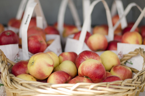 apple picking 11 | by kelliannwilson