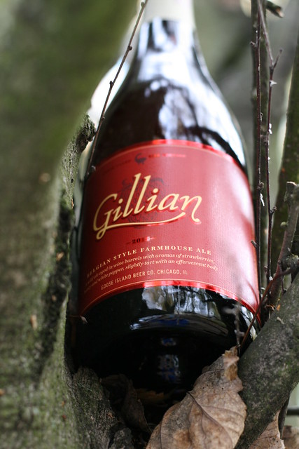A bottle of Gillian in the crook of a tree, placed there by yours truly using the stepladder referenced repeatedly in this post.