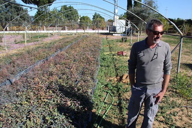 AionSur: Noticias de Sevilla, sus Comarcas y Andalucía 22772595574_d8456df01e_z_d 20.000 pistacheras para revolucionar la agricultura de la comarca Empresas Paradas Provincia Sin categoría