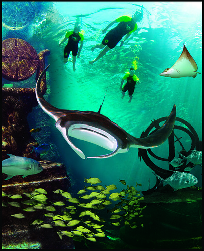 Snorkel the Ruins of Atlantis and make friends with gentle giant manta rays.