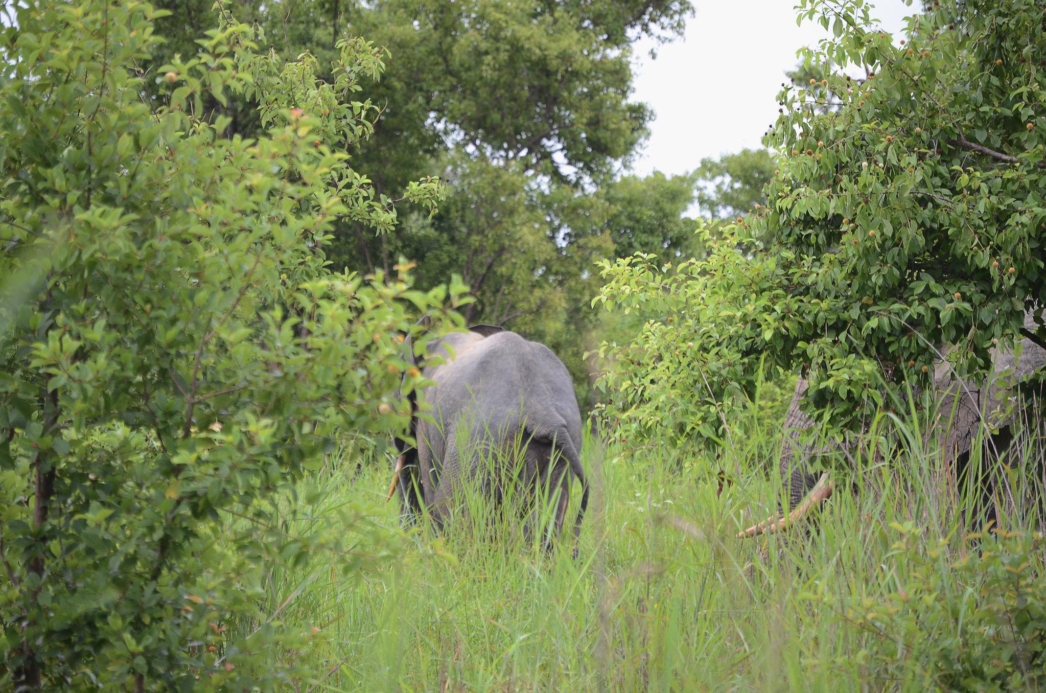 Elephant II | Mole