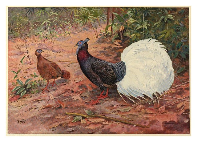 006-A monograph of the pheasants-1918-tomo 2