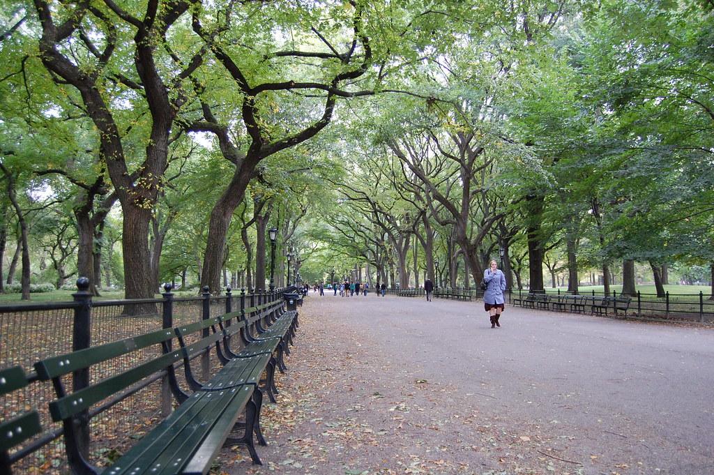 Paseo bajo los arboles en Central Park