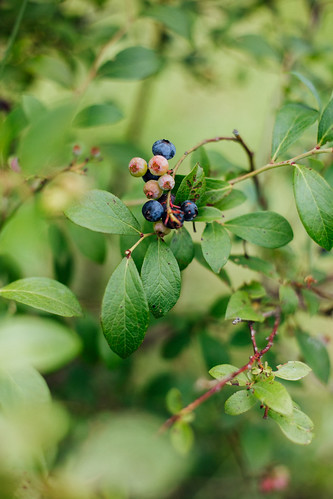 Blueberries Assados