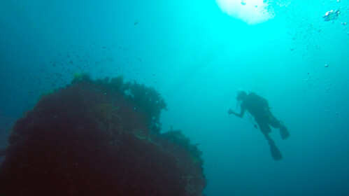 Diving at Twin Rocks