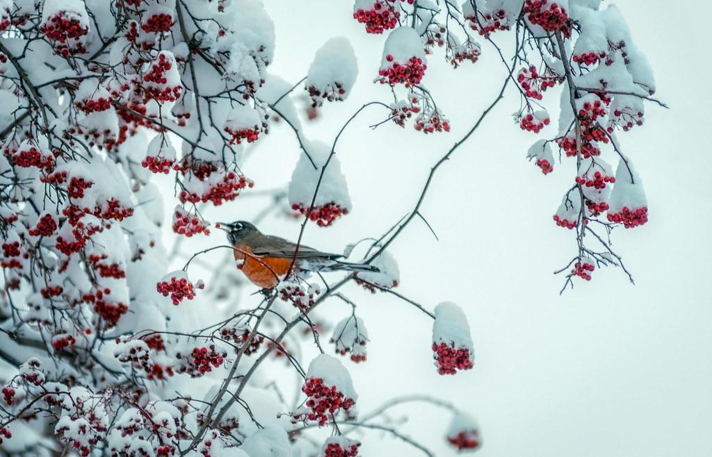 christmas dinner by davekoch_photo christmas dinner by davekoch_photo - Is Red Robin Open On Christmas