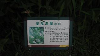 P4231869