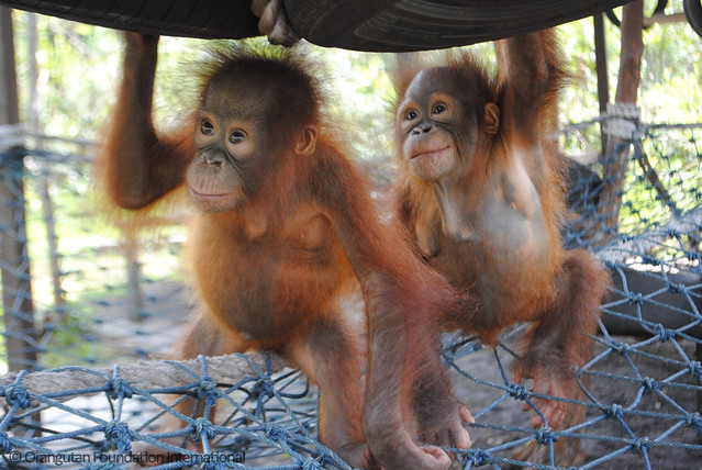 Orangutan Foundation International Doris & Holland