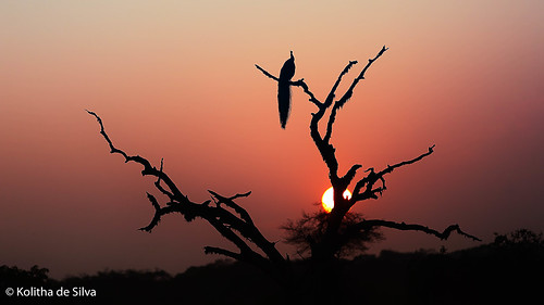 Sunrise at Yala National Park | by dkolitha