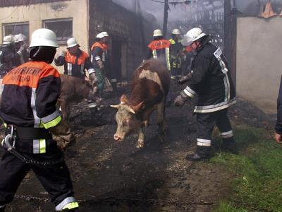 Großbrand Herold 2005