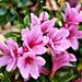 AUS, NSW, Sydney, Botanic Gardens K