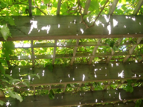 Trellis/ Makeshift Sukkah | by Aaron_M