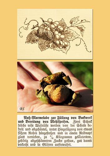 Walnuss Walnüsse Walnussbäume Neckarhausen Aserdamm Mannheim Seckenheim sammeln auflesen pflücken Rezept Nussmarmelade Herbst 2015 Foto Brigitte Stolle