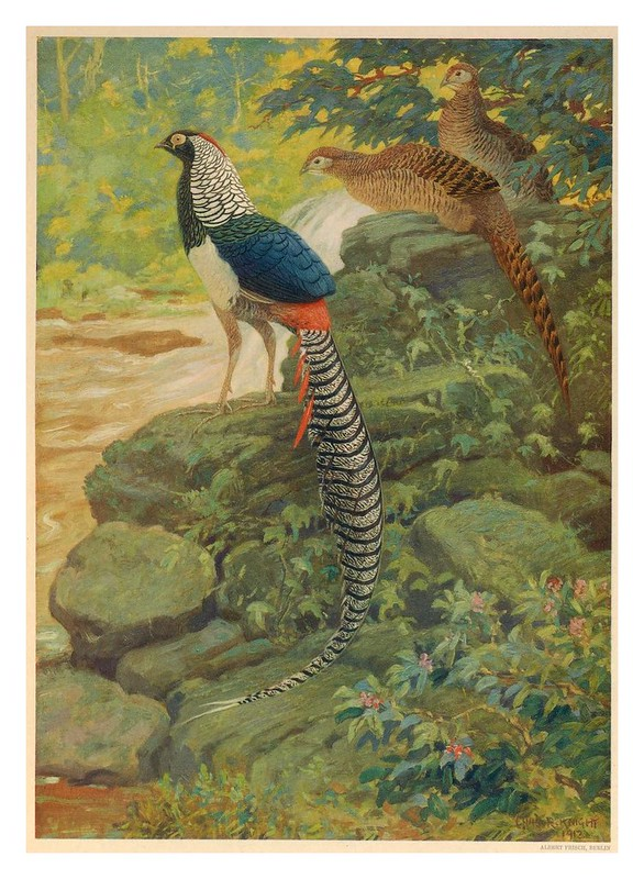 010-A monograph of the pheasants-1918-tomo 4