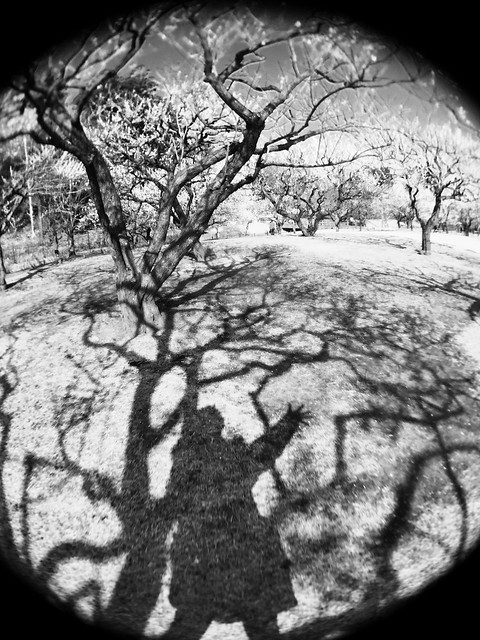 iphone photo 916: My shadow in Japanese aplicot orchard. Mito (Japan), 05 Mar 2017 (fisheye)