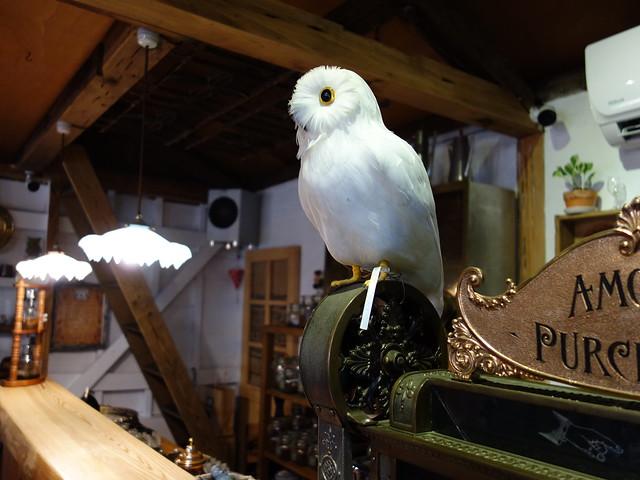 白色貓頭鷹,覺得是中世紀的故事場景裡必備的元素呀@波提娜麗精品咖啡