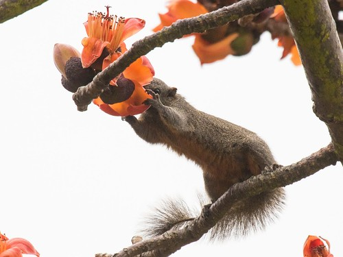 IMG_0026squirrel