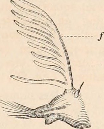 Image From Page 186 Of The Cyclopdia Of Anatomy And Phys Flickr
