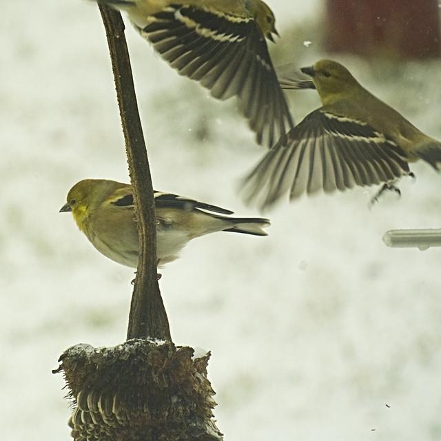 Birdies, anyone?