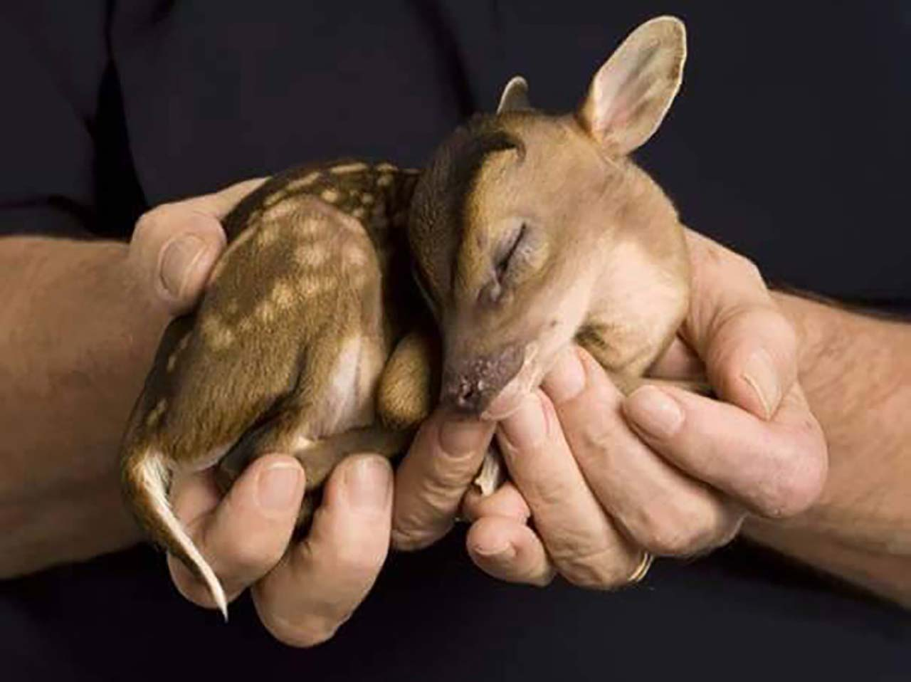 27 Adorable & Tiny Animals That Are Too Cute To Handle #10: Deer
