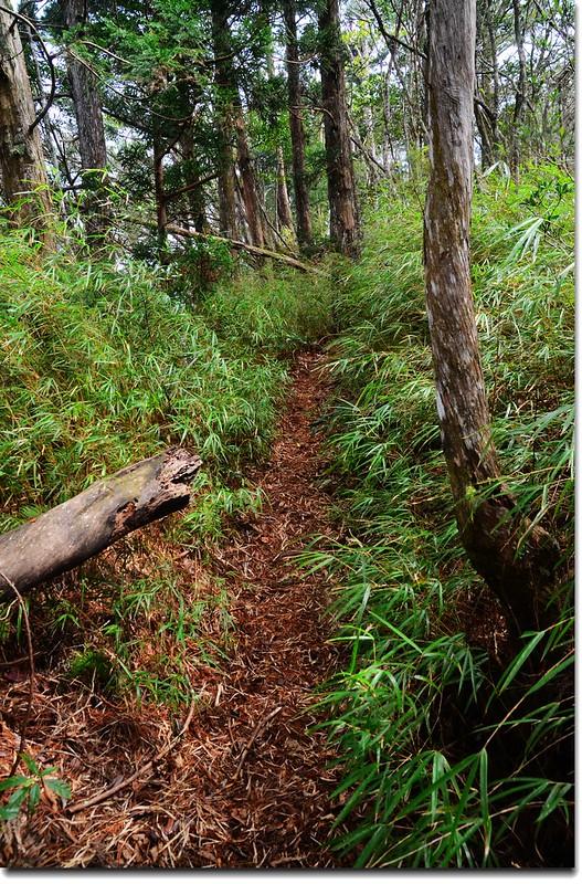 高台山登山步道 8