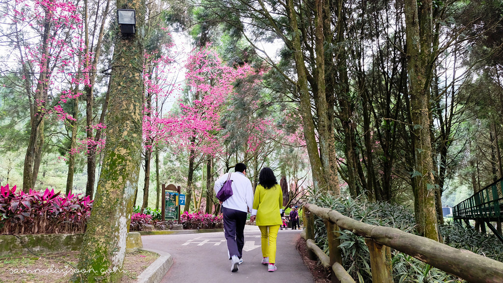 formosan-aboriginal-culture-village-train-cherry-blossom-couple