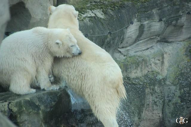 Besuch Zoo am Meer 29.12.201638