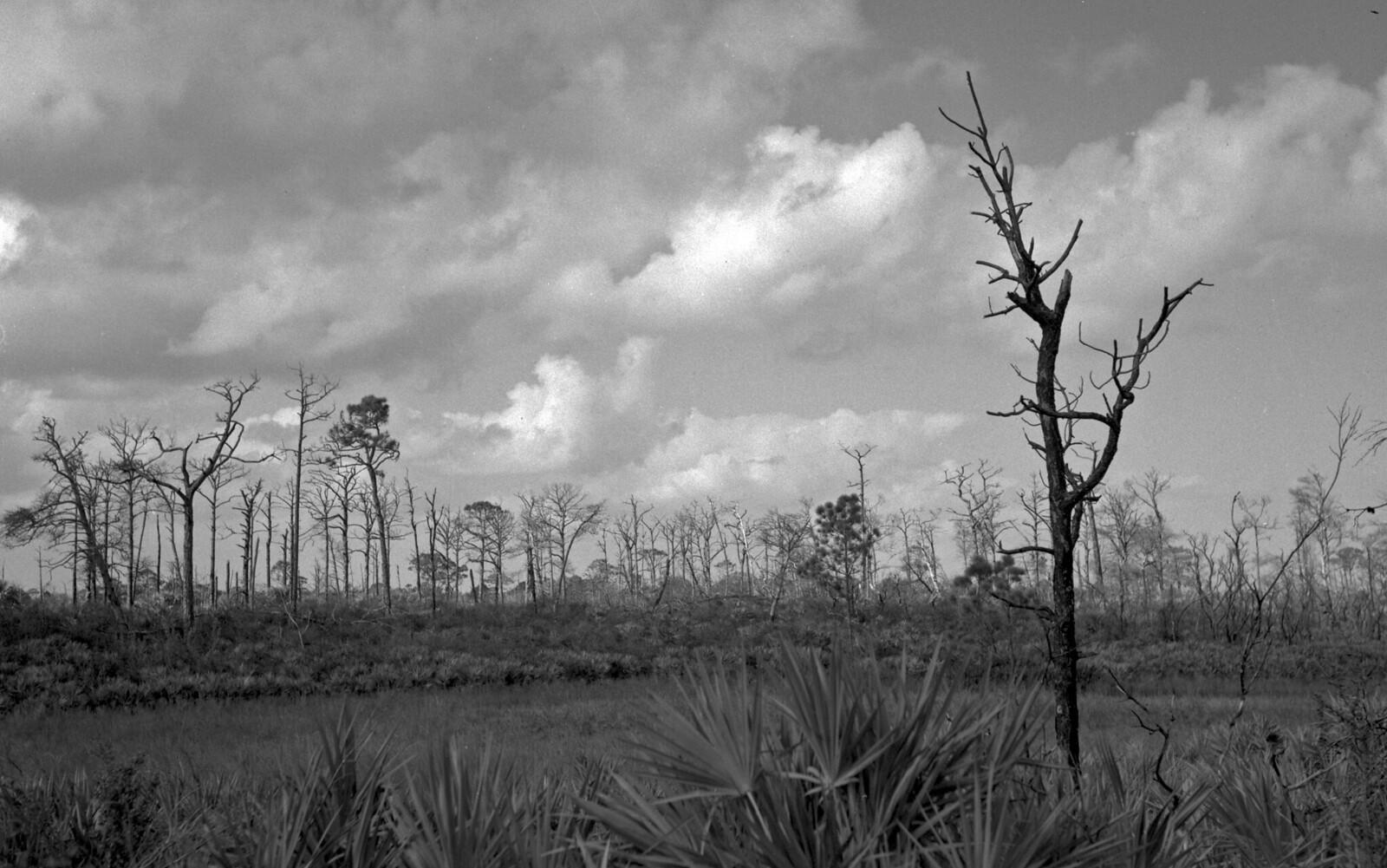 Apocalyptic Landscape | by PositiveAboutNegatives
