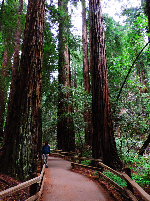 Best Autumn Hikes In California: Muir Woods National Monument, CA, USA