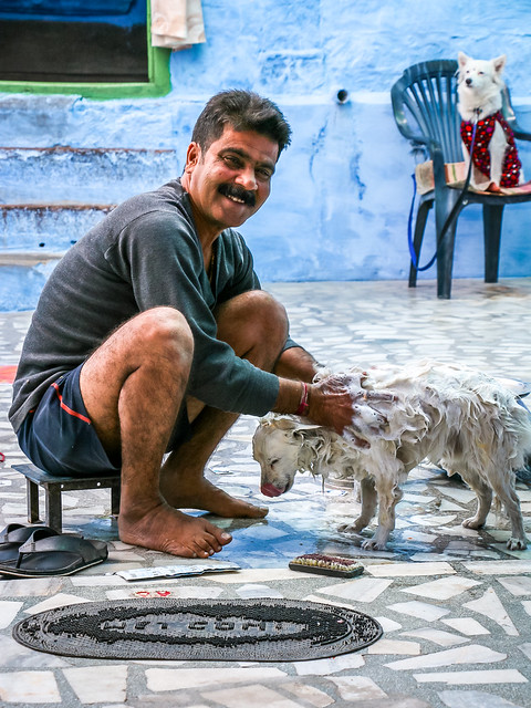 A man washing his dog, Jodhpur, India ジョードプル 犬を洗う男性