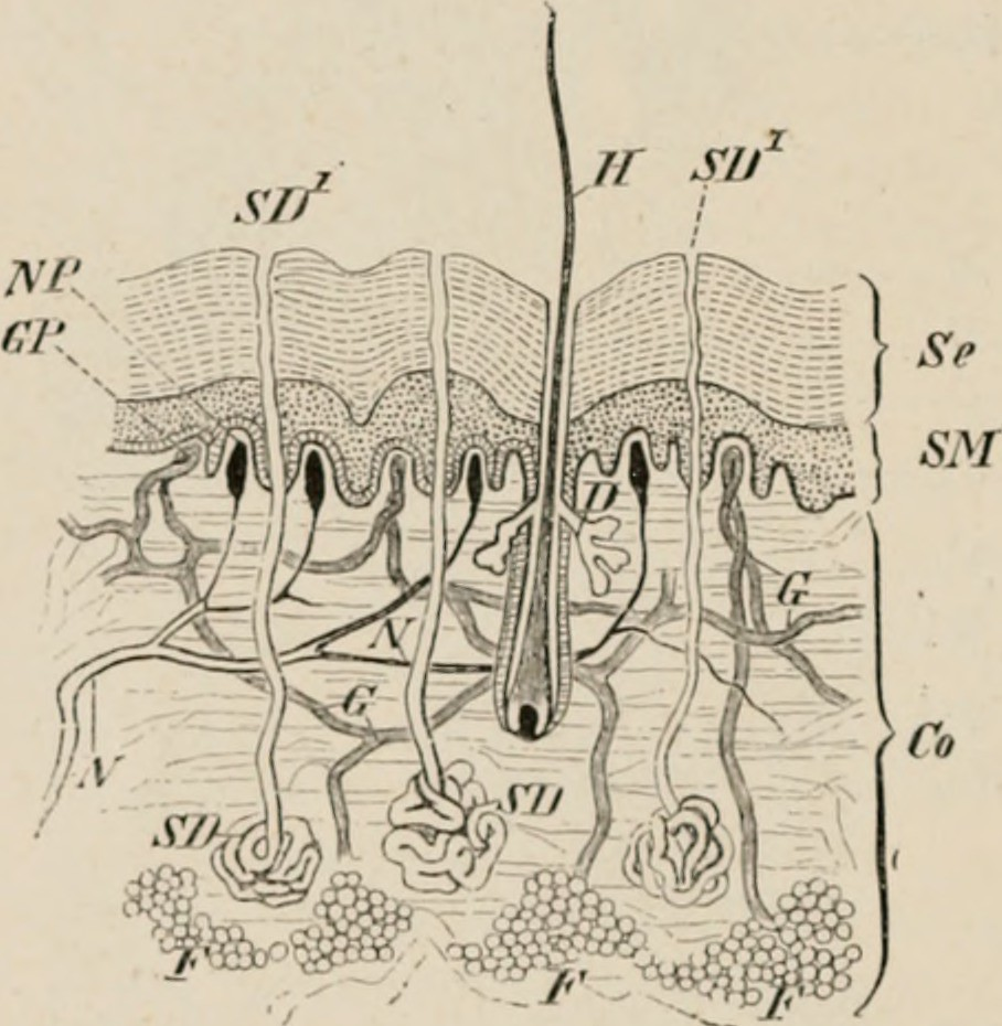 Image From Page 57 Of Elements Of The Comparative Anatomy Flickr