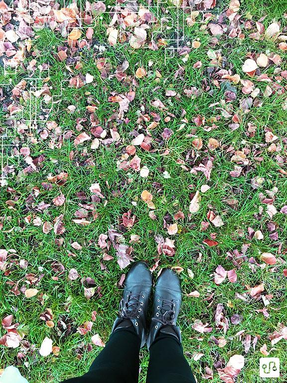 Outono em Primrose Hill