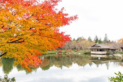autumn_leaves_2017_05