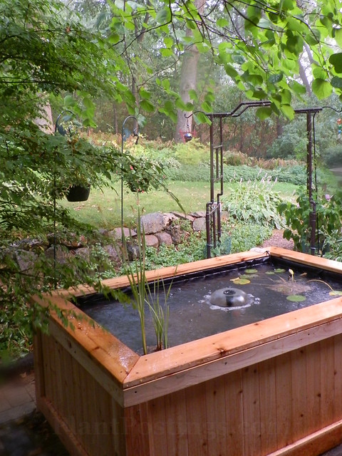 our pond 1