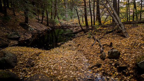 End of Beaver Pond @ Grater Woods | by marcn