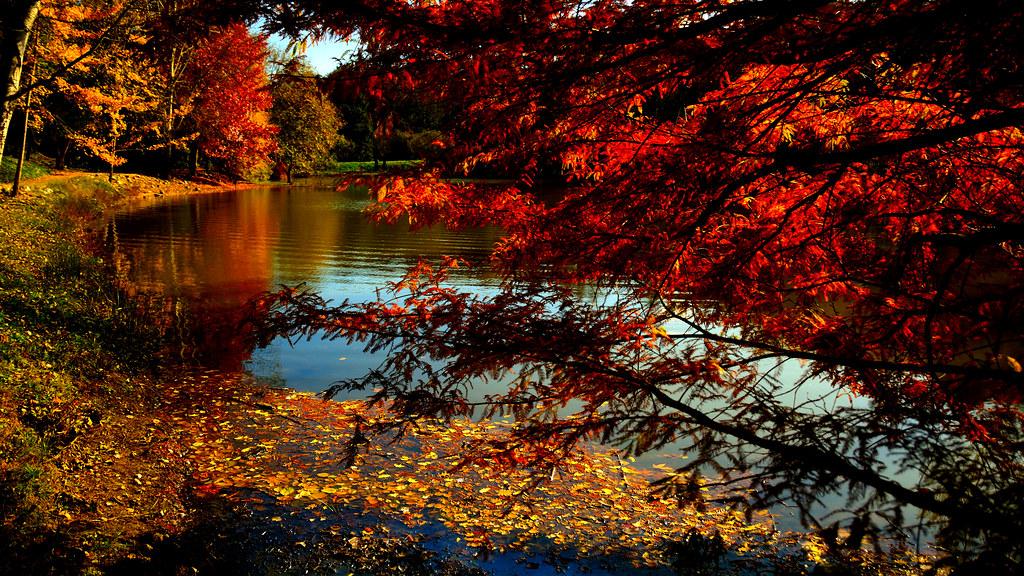 Autumn - Ataturk Arboretum Istanbul  The Ataturk ...